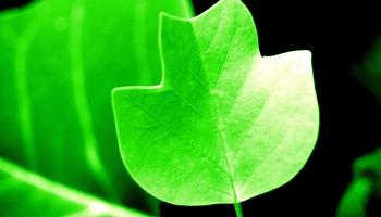 Kas ir zaļais iepirkums un kā to īstenot, domājot par dzīves kvalitāti
