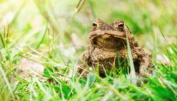 """""""Потрогал жабу - заработал бородавки"""". А как на самом деле?"""