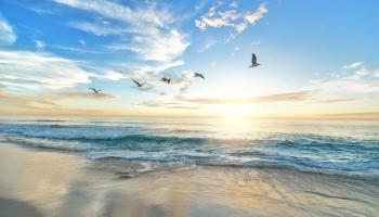 Cilvēka radītie šķēršļi putnu migrācijā uz ziemošanas vietām