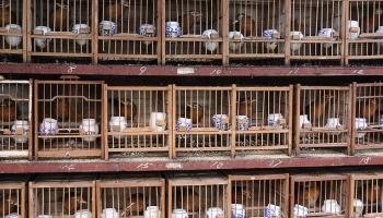 Dzīvnieku aizsardzības jautājumi Latvijā un citviet pasaulē