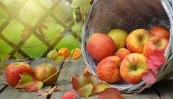 Может ли организм летом сделать запас витаминов на зиму?