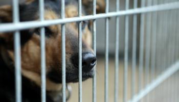 Благодаря ЧС, латвийцы стали забирать животных из приютов