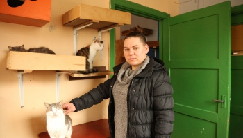 Инита Клинджане и её приют для бездомных котов: «Возможно, это моя миссия»