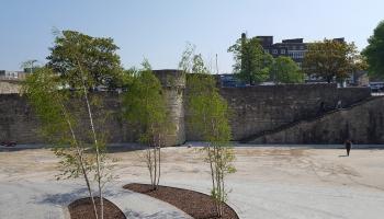 Kokkopis Edgars Neilands: Pilsētā kokiem ir vajadzīga cilvēku mīlestība