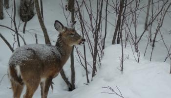 Kad klāt svētku mielastu savvaļas dzīvniekiem? Sapnis par tīru piekrasti