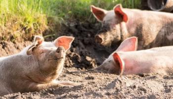 ES lauksaimniecības reforma: vai tā veicinās videi draudzīgu saimniekošanu