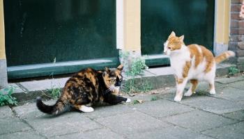 Bezšķirnes suņi un kaķi ir veselīgāki: mīts vai patiesība