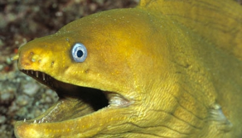 Pasaules gals, piemineklis un Double Faced Eels