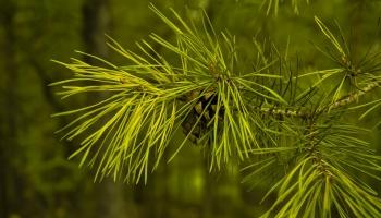В лес за здоровым образом жизни