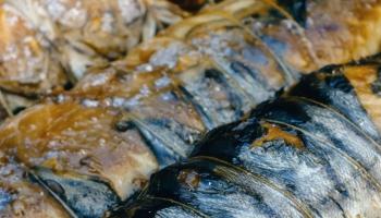 Zuši jāsaudzē. Vislabāk galdā celt viekārši pagatavotas Latvijā augušas zivis