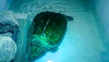 Latgales Zoodārzā Daugavpilī top ūdens dzīvnieku ekspozīcija