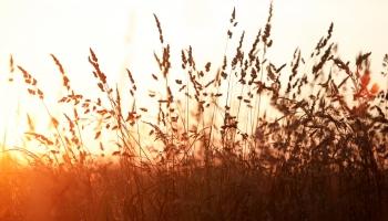 Saulgriežu laika tēmas raidījumā