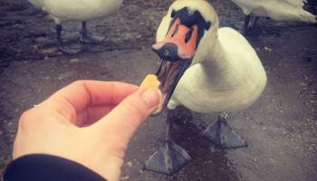 Безграничная забота о птицах зимой: накормить - навредить?