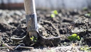 Урожай по осени считают. Овощеводы, плодоводы и цветоводы подводят итоги