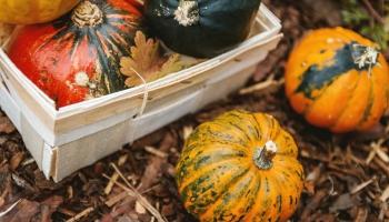 Dārza darbi oktobrī: laiks stādīt un pārstādīt, izgriezt vecos zarus
