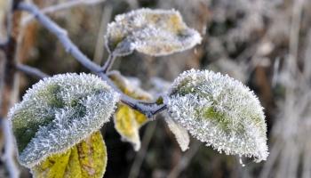 Синоптик: в Латвию идут морозы до -7, но это ненадолго