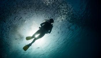 Zemūdens paradīze - Palau!
