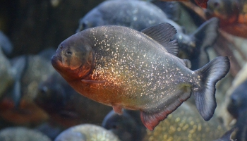 Эволюция подводных хищников: так ли они опасны?