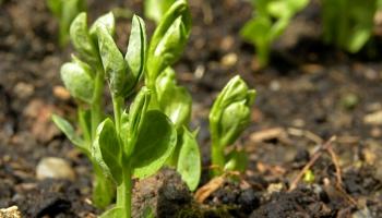 Silstot ekonomikai, siltumnīcas ceļ vairāk un stādaudzētāji audzē apgrozījumu