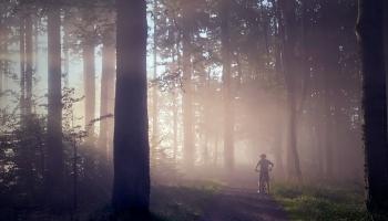Исцеляющая сила леса: первый в Латвии сертифицированный проводник лесотерапии