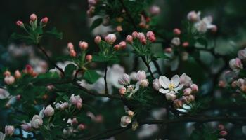 Ēdamie pavasara ziedi