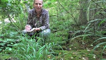 Agnese Priede: Zāles Latvijā netrūkst, bet īstas pļavas vairs nav katrā ceļmalā