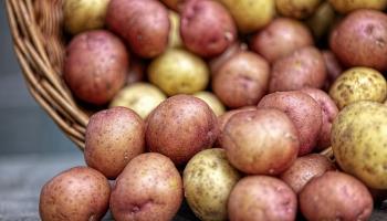 Vietējo dārzeņu tirgū pietiks. Sausums vairāk ietekmējis audzētājus Kurzemē