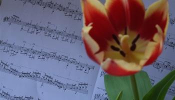 """Latvijas Radio 3 """"Klasika"""" programma 4. maijā svētkus ienesīs ikvienā mājā"""