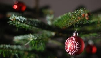 Ziemassvētku eglīte: izvēlēties skaistāko īstajā laikā
