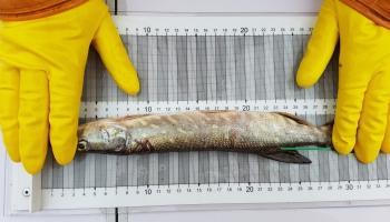 Kā klājas Baltijas jūrai un radībām tajā?