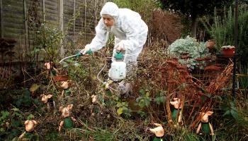 Pesticīdu ietekme uz cilvēka veselību jeb cilvēks pesticīdu pasaulē