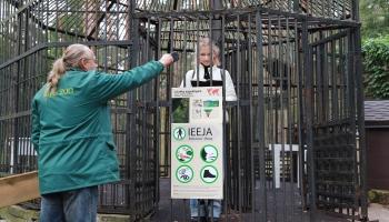"""""""Дразнить и кормить разрешается"""": новая экспозиция в Рижском зоопарке"""