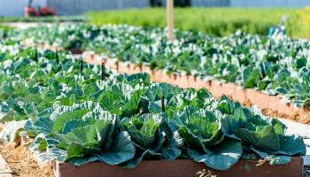 Ilgtspējīga lauksaimniecība: kādai tai jābūt, ko izprotam ar šo jēdzienu