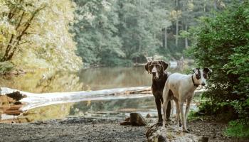 Mīlulis dodas brīvsolī: vai to var ļaut sunim, ko nosaka likums un kā reaģē kaimiņi