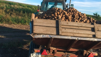 Darbs lauksaimniecībā – smags, zems atalgojums, disciplīnas trūkums un nevēlēšanās strādāt