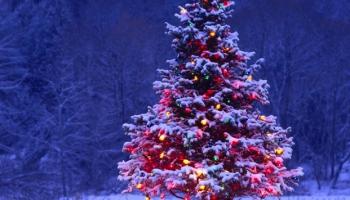 """""""Tik spoža mirdz mums eglīte"""" - vārdi, kas skan sagaidot un pavadot Ziemassvētkus"""