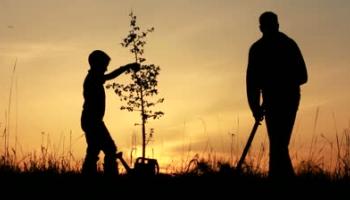Дети и родители: яблоко от яблоньки?..