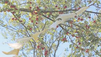 Kokkopis par ābelēm, ozoliem un citiem kokiem