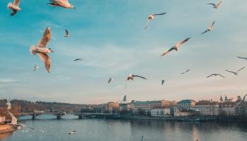 PVD pagājušajā nedēļā konstatējis piecus pārkāpumus mājputnu turēšanas prasībās
