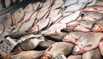 Latvijas iedzīvotāju zivju ēšanas paradumi