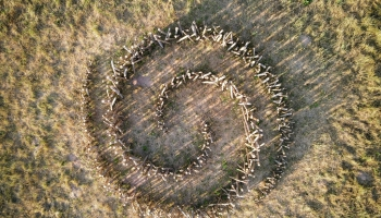 """Vides un mākslas festivāls """"GreenFest '21"""" Gaujas Nacionālā parka teritorijā"""