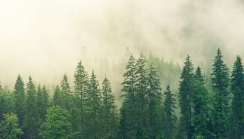 Исследователи разочарованы качеством латвийских лесов