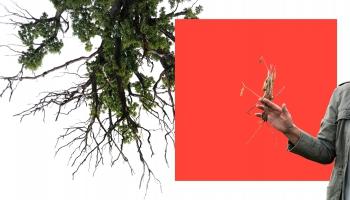 Māksla un vide. Kas kopīgs dabai un māksliniekam?
