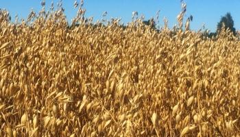 Līdz šim slēgtie tirdzniecības līgumi veicinājuši lauksaimniecības produktu eksportu
