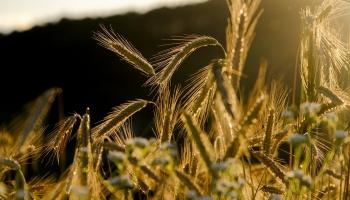 Liepājas ostā pēdējos gados būtiski palielinājies lauksaimniecības kravu skaits