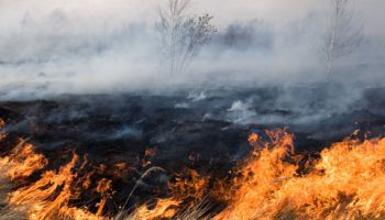 С начала года в Латвии зарегистрировано уже более тысячи пожаров старника