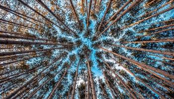 Grozījumi noteikumos par koku ciršanu: uzklausām iesaistīto pušu viedokļus