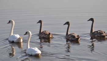 Птичьи трели в феврале: уже прилетели или вообще не улетали?