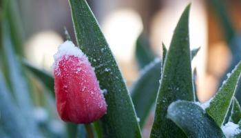 Laika apstākļi brīvdienās un turpmāk maijā
