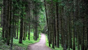 Новые дороги в заповедных лесах - для противопожарных нужд, а не для грибников
